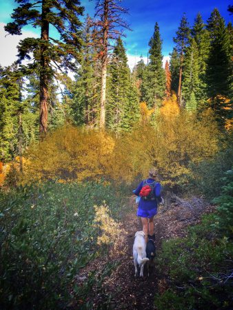 Betsy, Daisy and Little Dog on the trail leading to Sawtooth